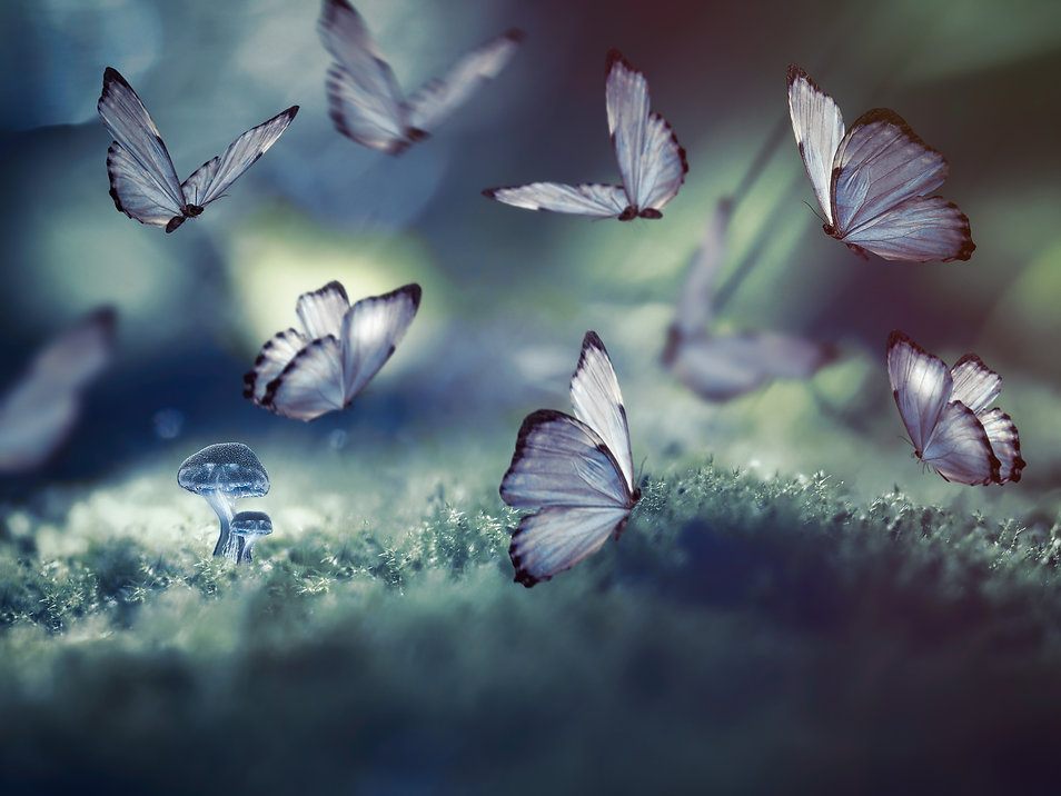 Huge butterflies and the little glowing