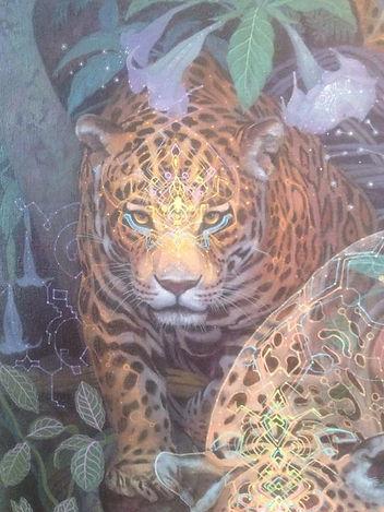 Jaguar Aya.jpg