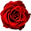 Thumbnail: Dieta Only_Sacred Rose
