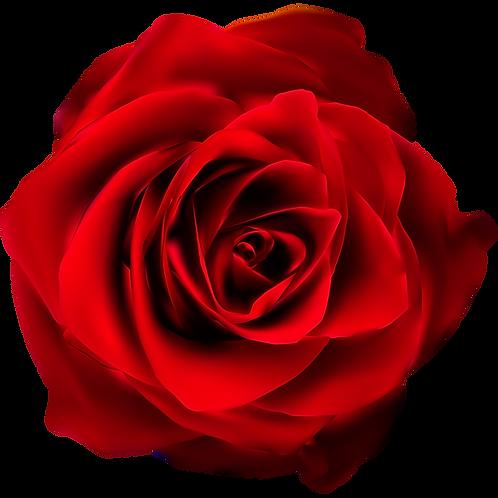 Dieta Only_Sacred Rose
