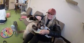 Cat Cafes In Japan | Cafe Neko 8