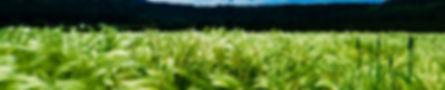 concimi, fertilizzanti, idrosolubili, sole, natura, materie prime, cura della terra, pianta, coltivazioni, amore per la natura, seme, crescita, minerali, organici