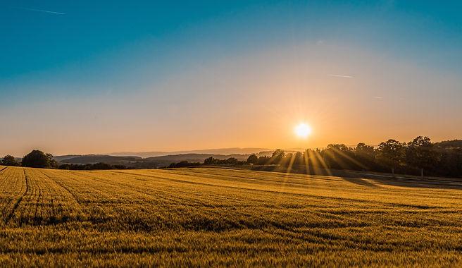 La sostenibilità ambientale, cui l'Azienda fa riferimento, prevedeil rispetto di alcuni indicatori, quali la difesa integrata, la sostenibilità dei terreni, la gestione dei contaminanti, la rintracciabilità, la sicurezza sui luoghi di lavoro ed ilriconoscimento del prezzo equo agli agricoltori.