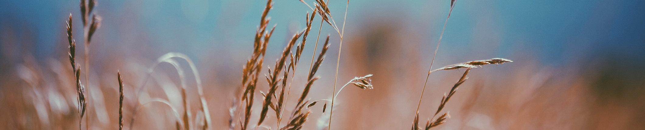 sementi, cereali, materie prime di alta qualità