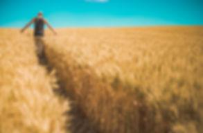 contatti,campanacereali,zootecnia,lazio,italia,produzione,materie prime, agricole, info,raccolta,grano,frumento,soia,mangimiseplici,contatti, numeriditelofo,email