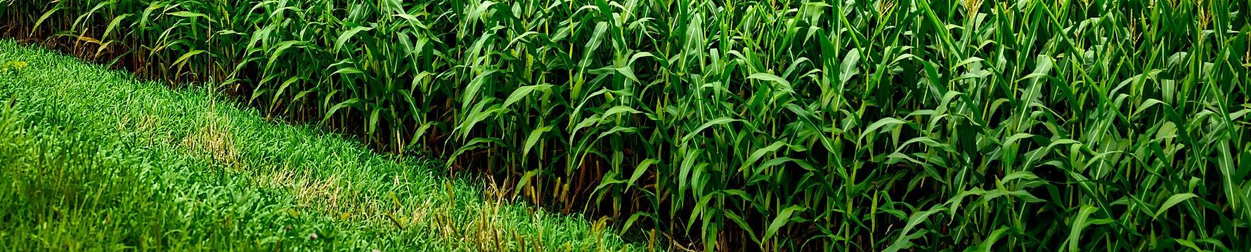 I fitofarmaci quindi, denominati anche prodotti fitosanitari o agrofarmaci sono tutti quei prodotti, di sintesi o naturali, che vengono utilizzati per combattere le principali avversità delle piante quali malattie infettive, fisiopatie, parassiti e fitofagi animali, piante infestanti.