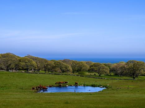 Keith Farm-2.jpeg