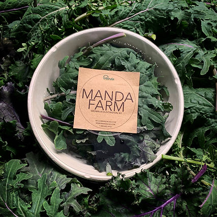 manda farm salad mix first harvest