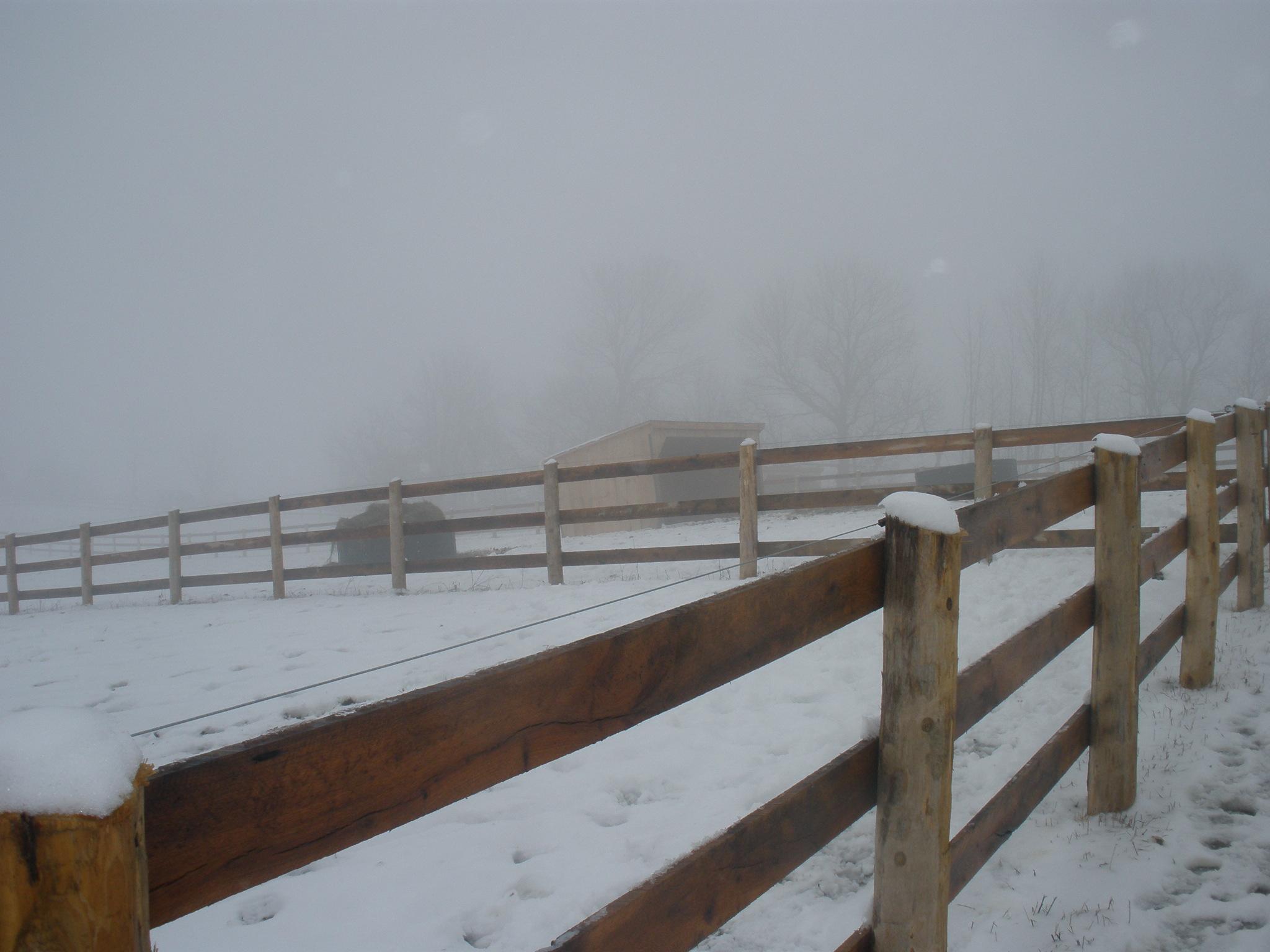 Where did all the horses go!.3.jpg