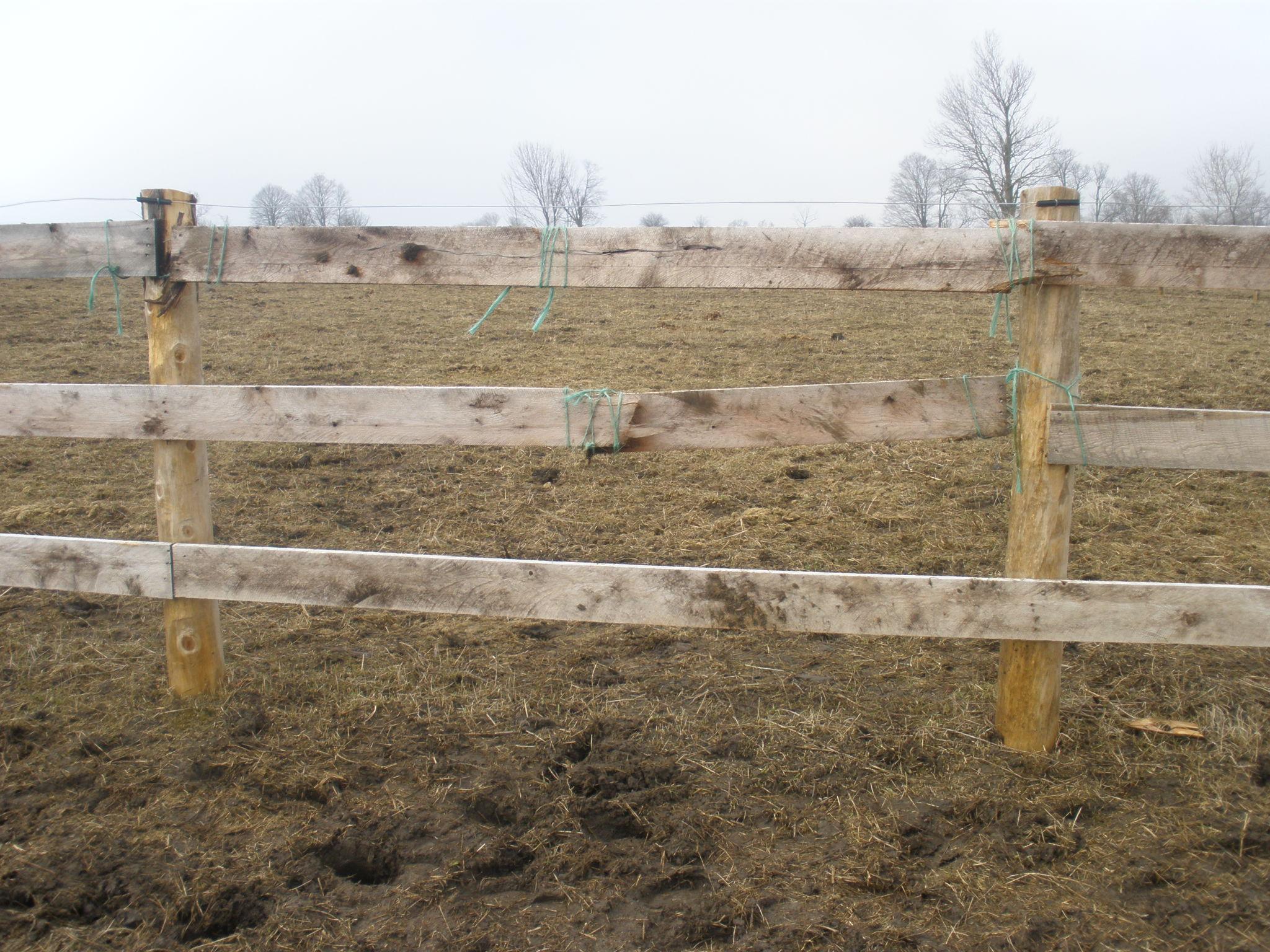 Fence damage..jpg