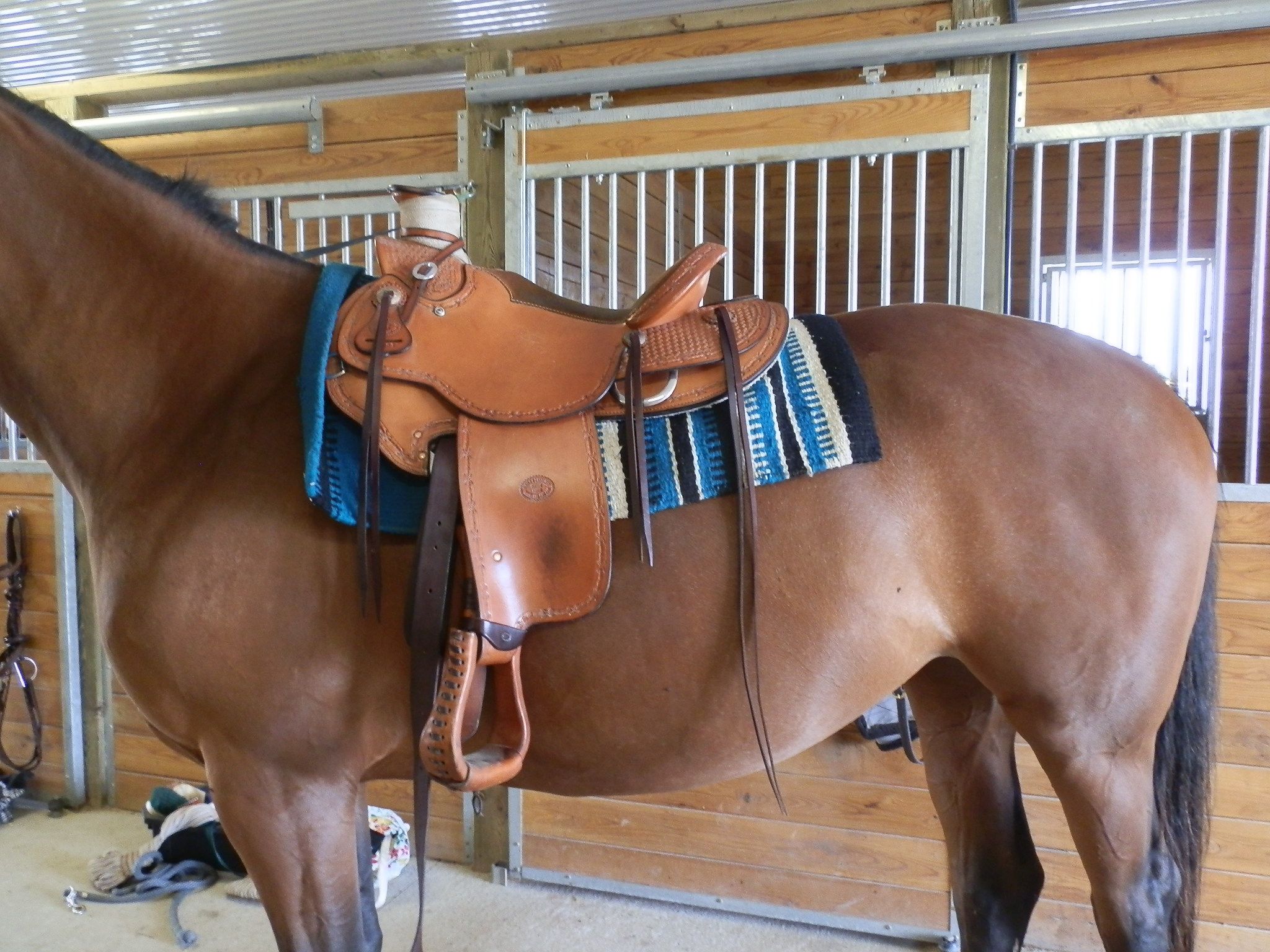 THRILLED WITH THE SADDLE!.jpg