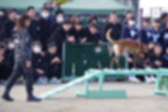 tisato2.jpg