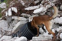 瓦礫捜索訓練