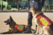 防災訓練 救助犬