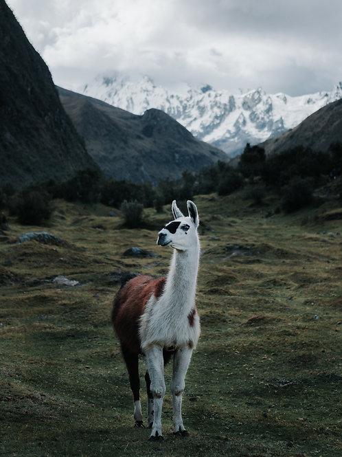 South America - Mobile Preset