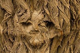 tree-2127699_1920.jpg