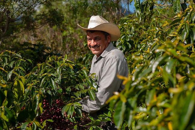 Happy guatemalan farmer collecting Arabi