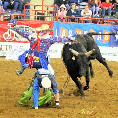RODEO BULL FIGHTER – 2019