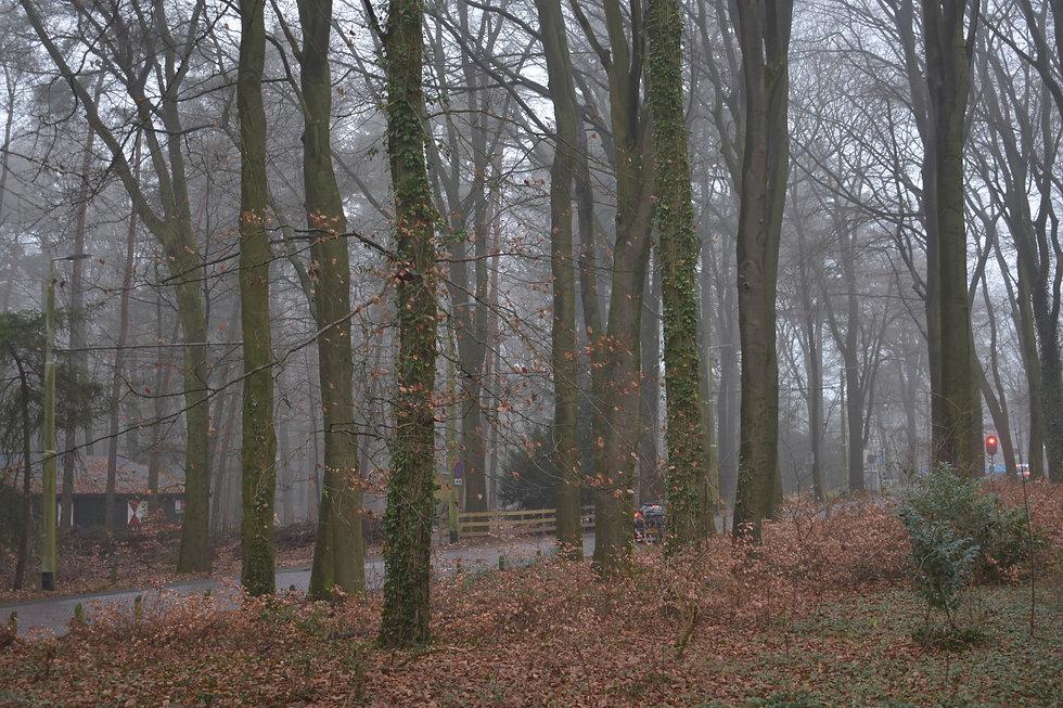 DSC_0265.jpg-alberi2.jpg