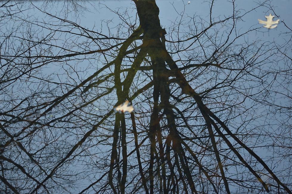 DSC_0280.jpg-albero.jpg
