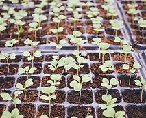 Plantes en boîtes