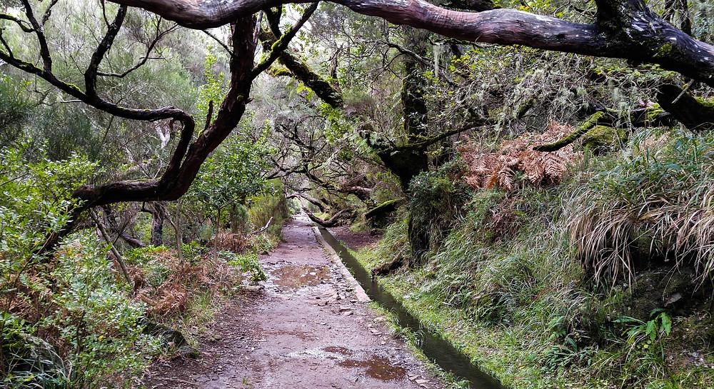 PR6 levada 25 Fontes, Madeira