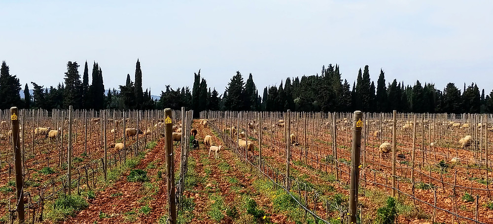 Finca Biniagual wineyard, Mallorca
