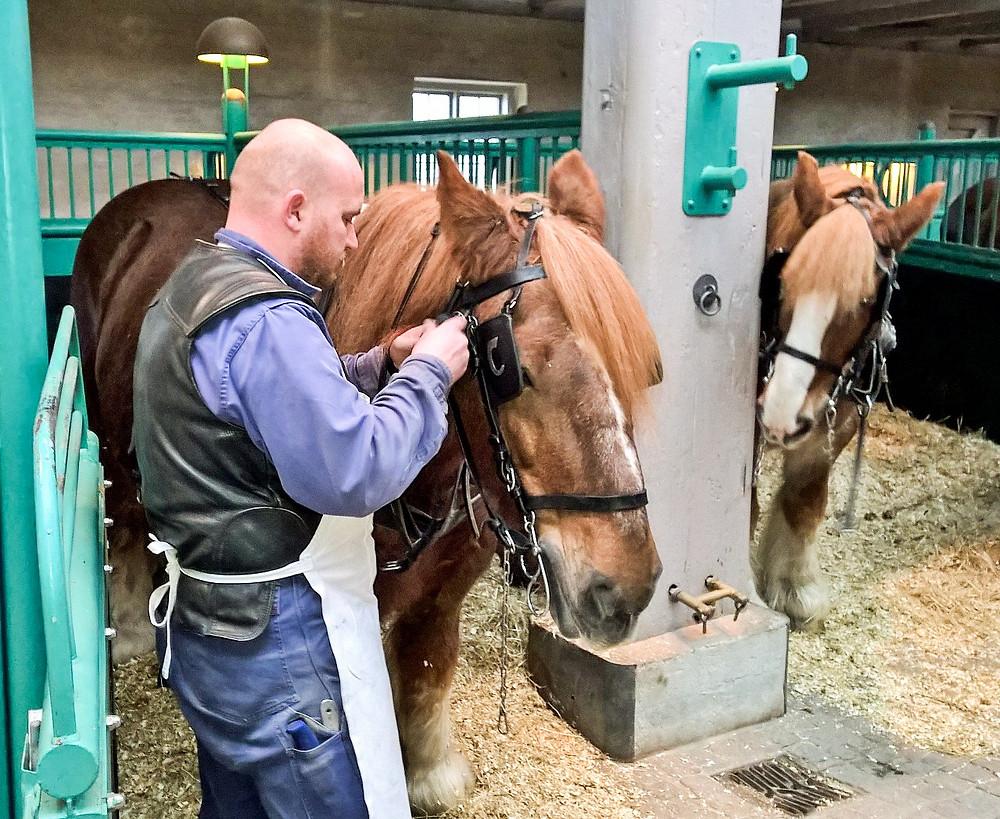 Carlsberg Horses