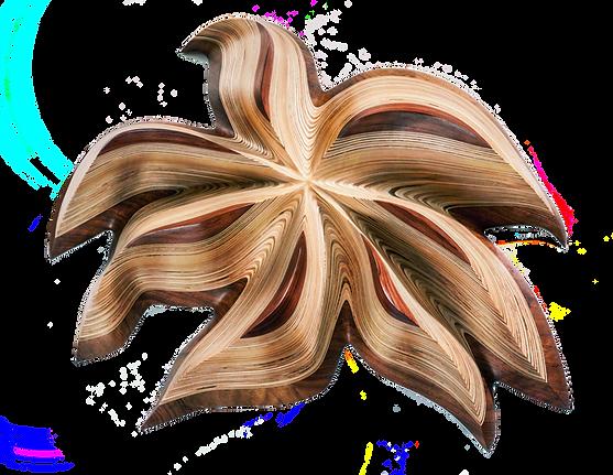 starflower bubinga no background.png