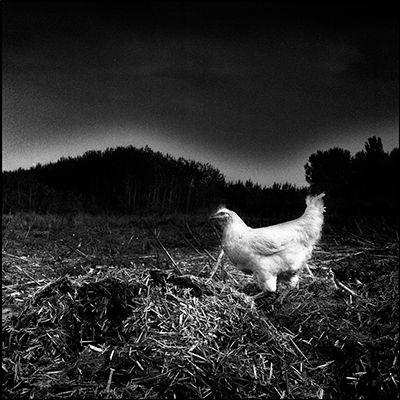 30_chick.jpg