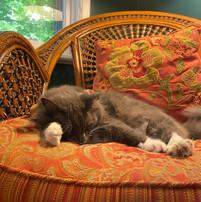 Harp on the Hill Studio's resident kitty cat