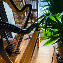 Harps used for harp lessons at Harp on the Hill Studio