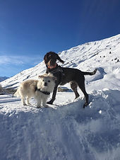 Theoriekurs für (Neu)Hundehalter