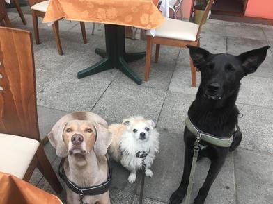 Hundetraining im Restaurant