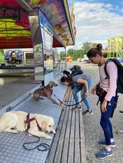 Hundetraining an der Chilbi