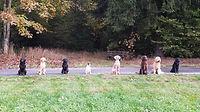 8 Hunde in Line nebeneinander am Wegrand