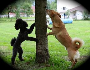 Mixhundekurs / Partydogs - für den Familien-Begleithund