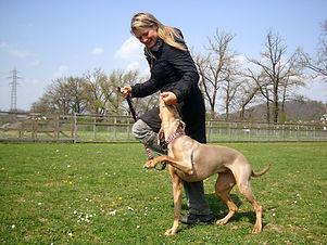 Wir trainieren deinen Hund für dich