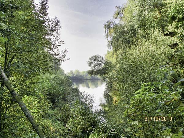 Forest-sur-Marque