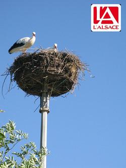 Alsace (Le Brezouard)