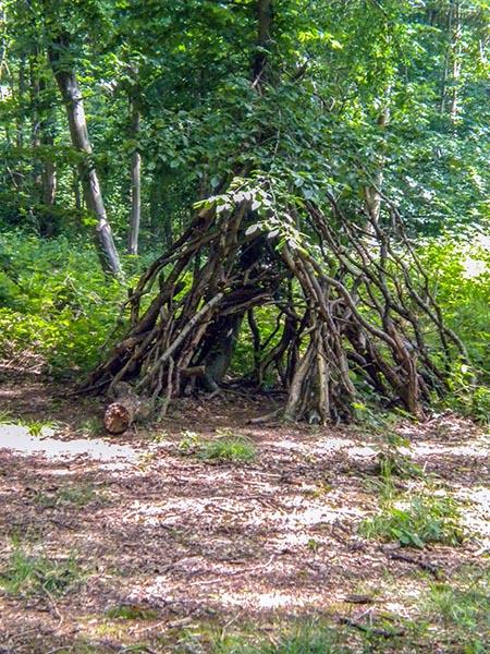 Forêt de Phalempin