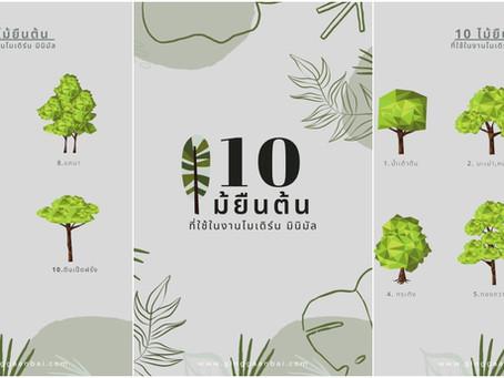 10 ต้นไม้ใหญ่ ทรงได้ฟอร์มดีที่ 'กิ่งฯ' ชอบใช้บ่อย ๆ