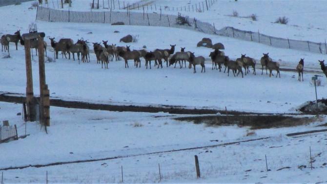 Your Daily Fiber, Cascade 220, and Elk