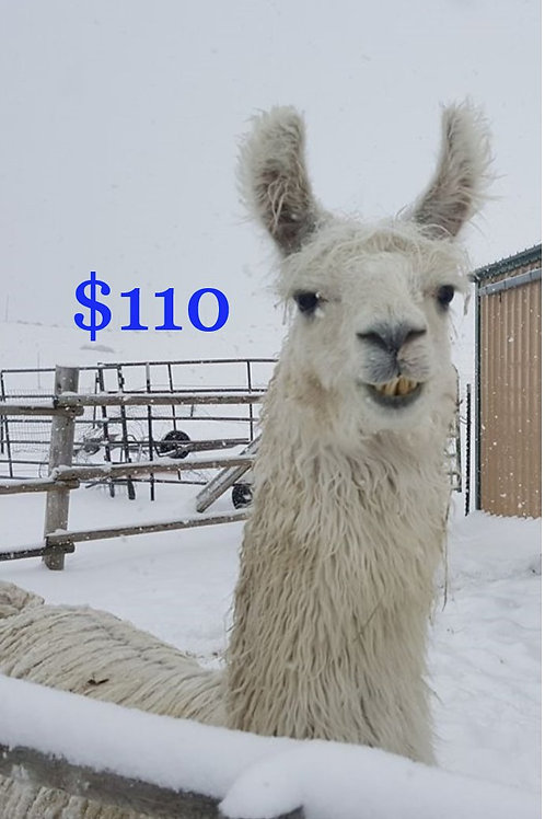 Gift Certificate $110