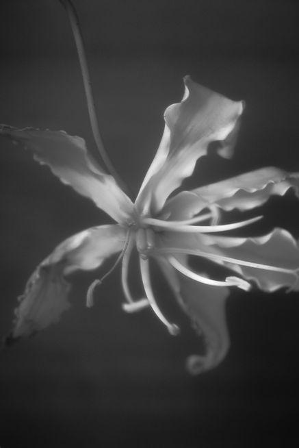 flower 30.jpg