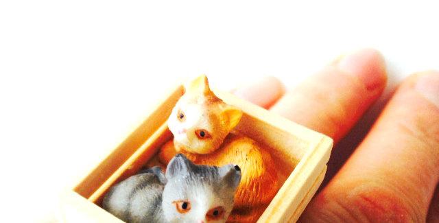 Bague LES CHATONS, chats miniatures dans leur petite caisse