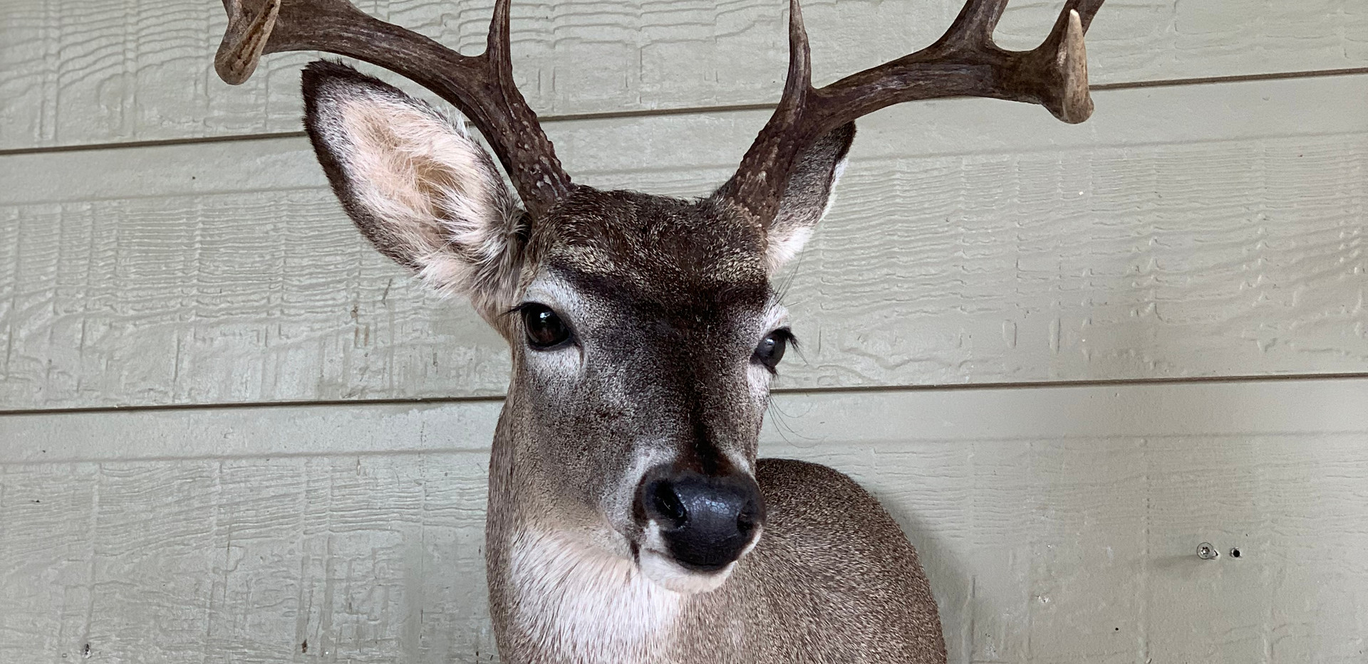 Whitetail LT