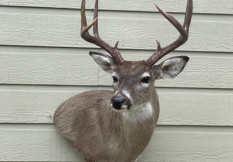 Whitetail WP LT