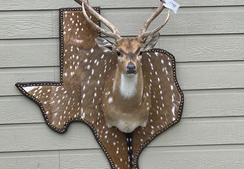 Axis On Texas