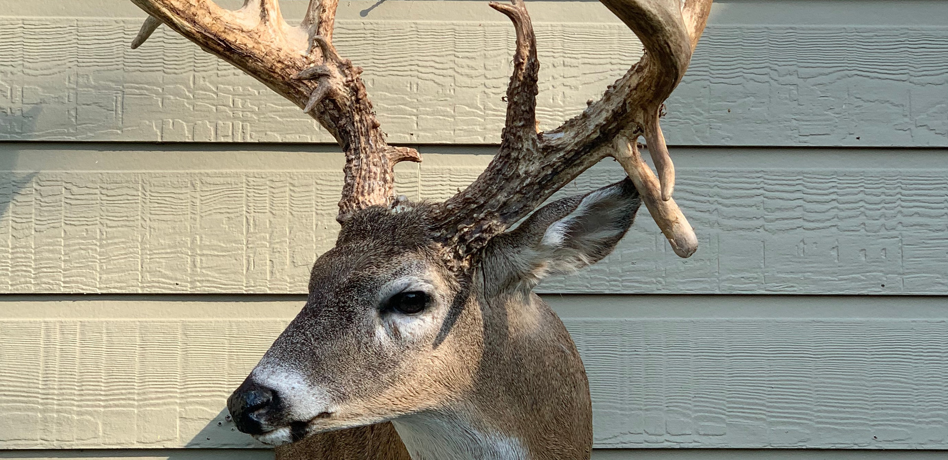 Whitetail 90 Turn